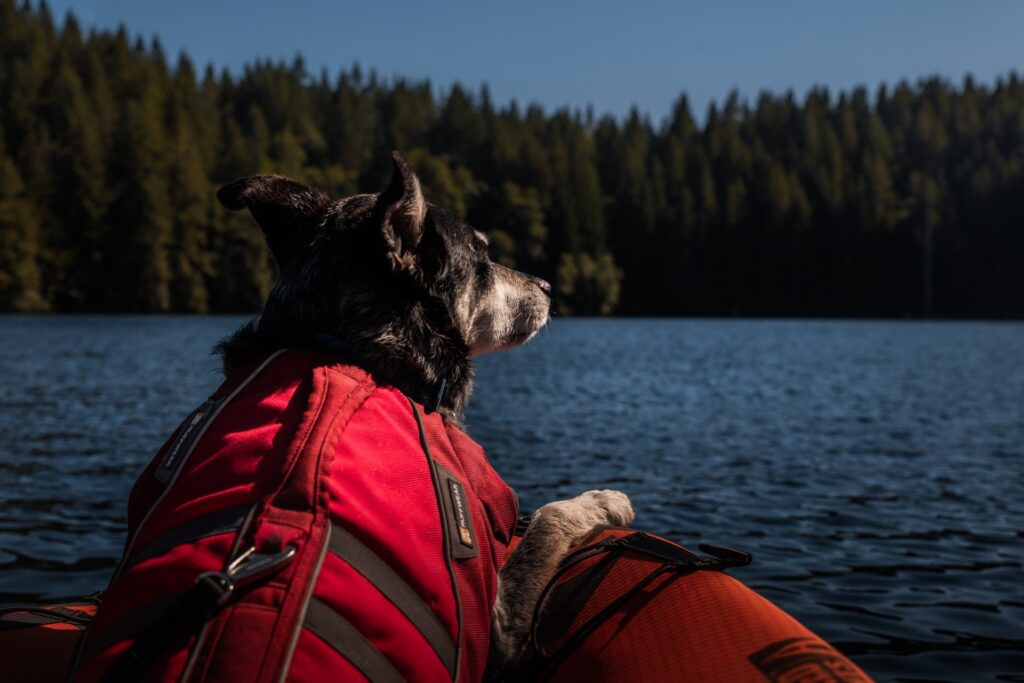 Launch A Kayak With A Dog