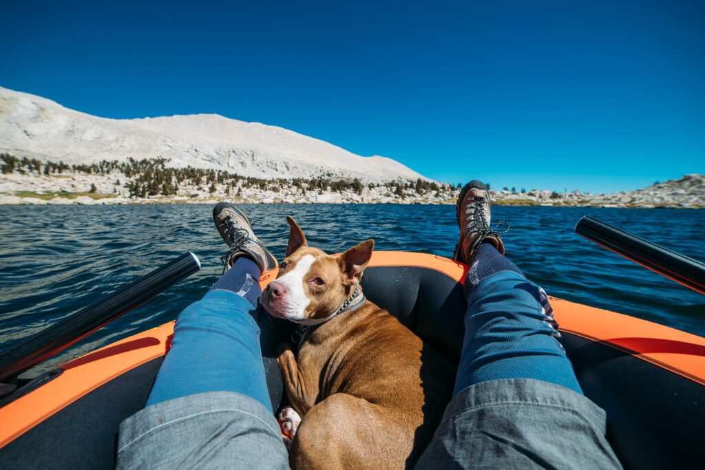 kayaking with a dog